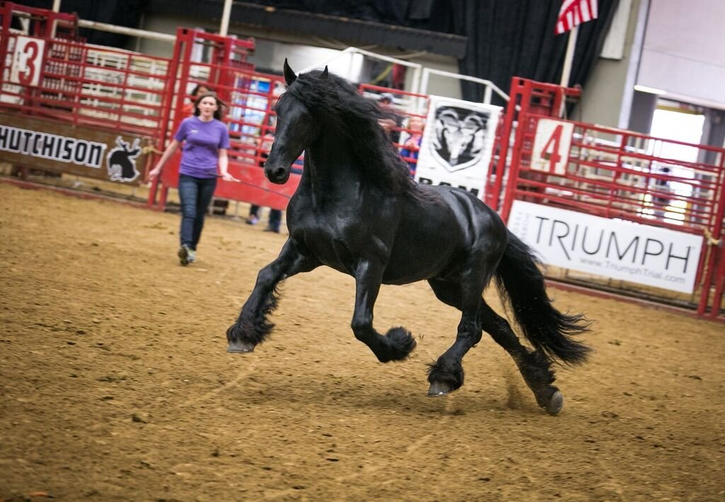 Courtesy: Midwest Horse Fair