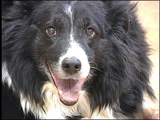 Jiffy in December 2008