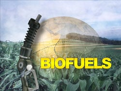 Biofuels will rule the world. Photo illustration by Amy Patterson