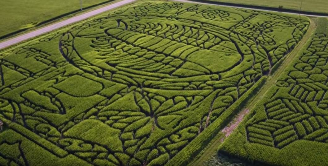 Treinen Farm corn maze