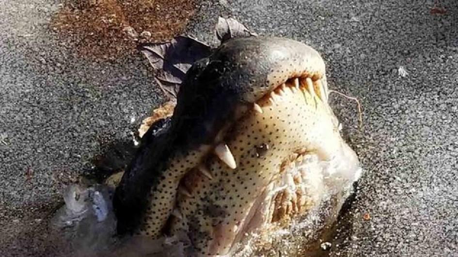 Courtesy: Shallotte River Swamp Park/Facebook