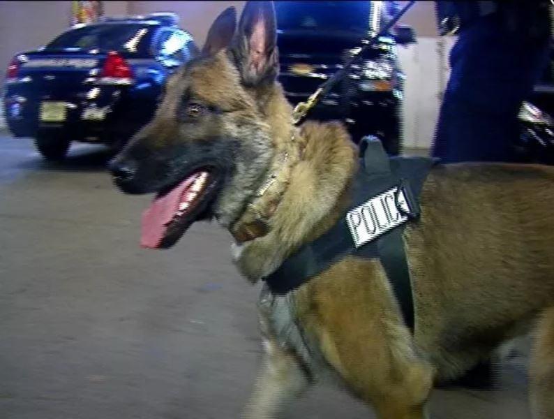"Janesville Police K9 ""Fred"""