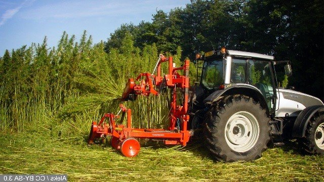 File photo: Hemp farming