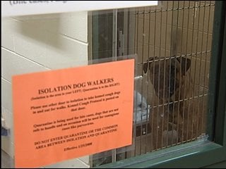 Igor, a bull mastiff, remained at the Dane County Humane Society on Monday.