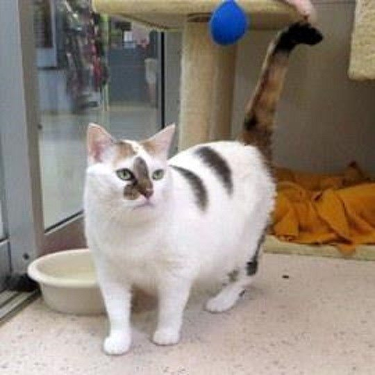 What Domestic Cat Are You Quiz Humane Society