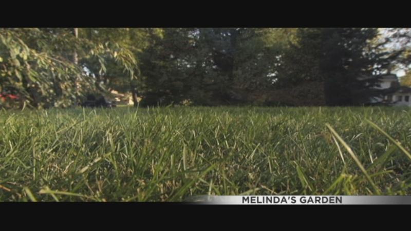 Melinda 39 S Garden Lawn Care Wqow Tv Eau Claire Wi