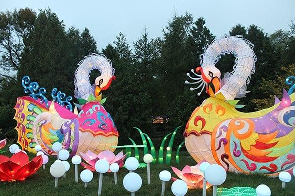 Magic Of China Lights Returns To Boerner Botanical Gardens Ktiv News 4 Sioux City Ia News