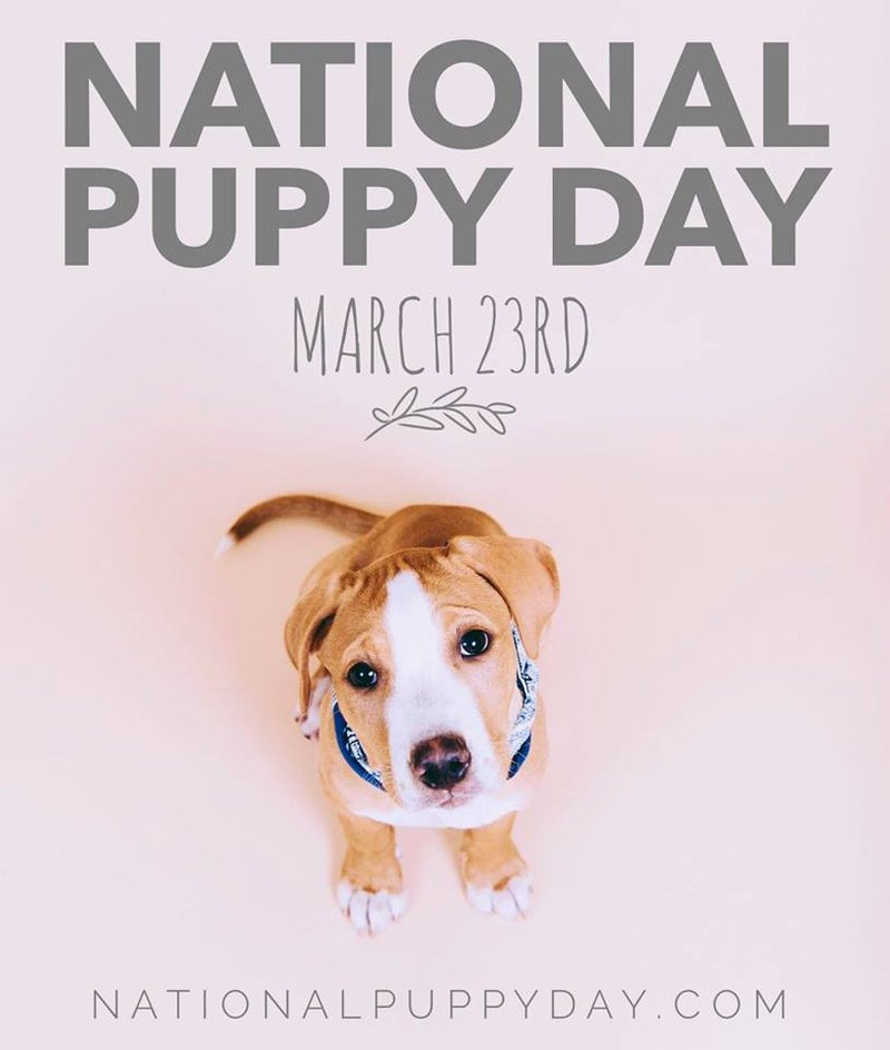 Adopt A Dog For A Day