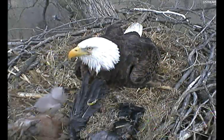 eagle nest lesbian personals Introduction eaglenest (or eagle's nest) wildlife sanctuary (hereafter ens 27º02´–09´n 92º18´–35´e 200–3,200 m) and sessa orchid sanctuary (hereafter sos 27º06´–10´n 92º27´–.