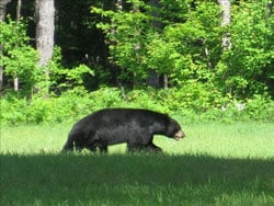 Neither will the bears who are betting on economic ruin. Photo by Kathy Stevens