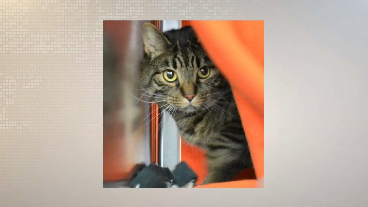 Oliver/Dane County Humane Society